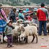 Venta de ovejas - Mercado dominical - Combapata - Canchis - Cusco - Peru