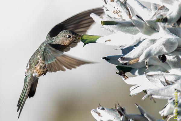 Fauna - Perú